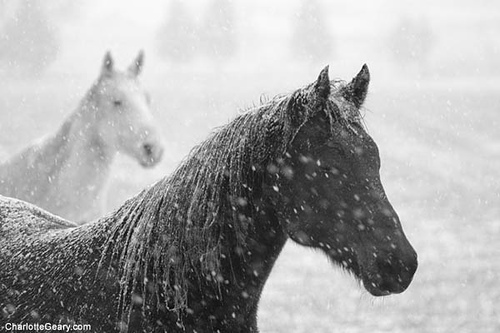 horse-in-the-snow.jpg